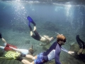 Dive Centre Las Americas and Abades Tenerife