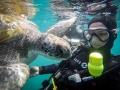 PADI Divemaster internship - Snorkelling in Tenerife