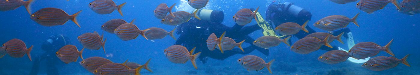 PADI-Divemaster-Internship-Academy-Diving-School-Fish