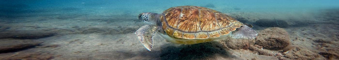 PADI-Divemaster-Internship-Academy-Diving-With-Turtles-Tenerife