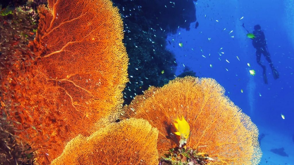 coral-reef-conservation-diver_0